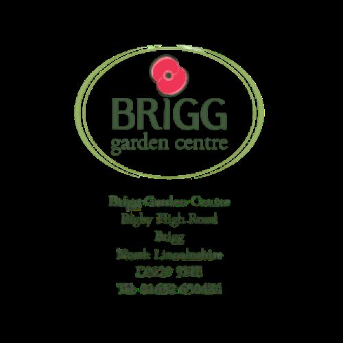 Brigg (2)